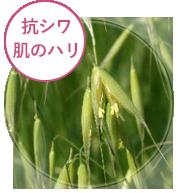 美容液リッチリフト 成分 オシリフト(抗シワ・ハリ)